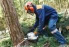 Abbeywood Tree felling services 21