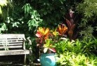 Abbeywood Tropical landscaping 11