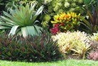 Abbeywood Tropical landscaping 9